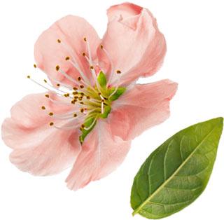 voorjaar_bloom-1