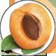 Abrikozen_Apricot