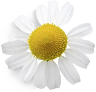 voorjaar_bloom-2